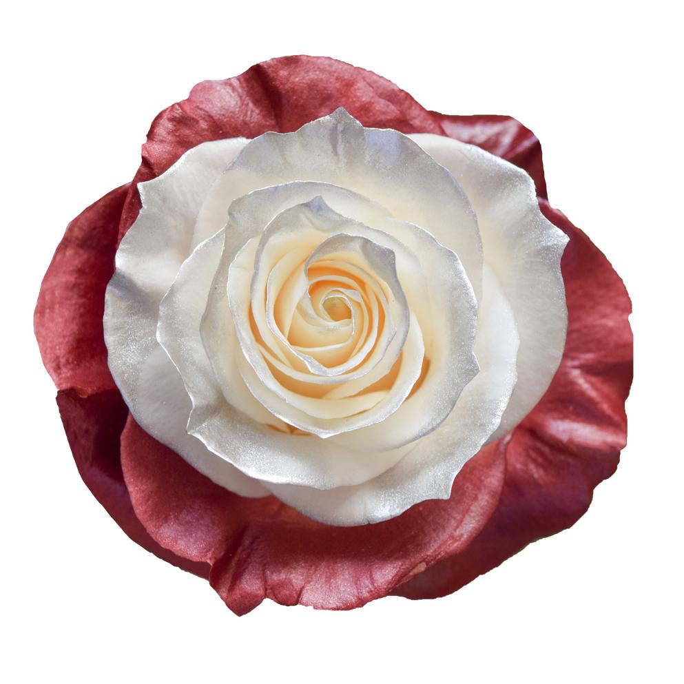 Tinted roses spraying variants 2