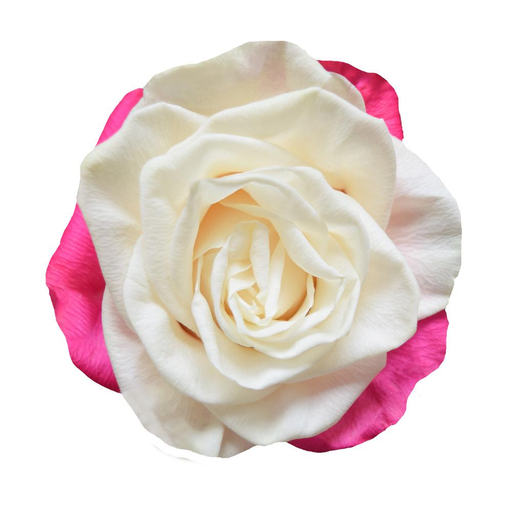 Tinted roses spraying variants 4