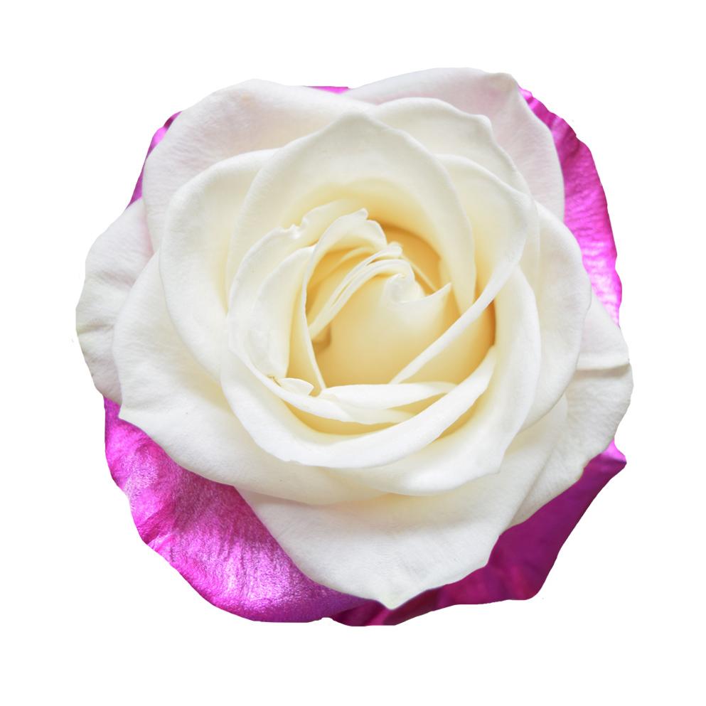 Tinted roses spraying variants 5