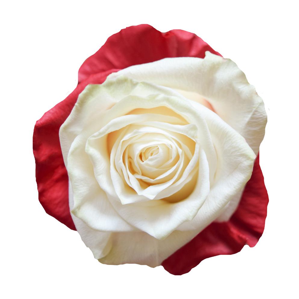 Tinted roses spraying variants 7