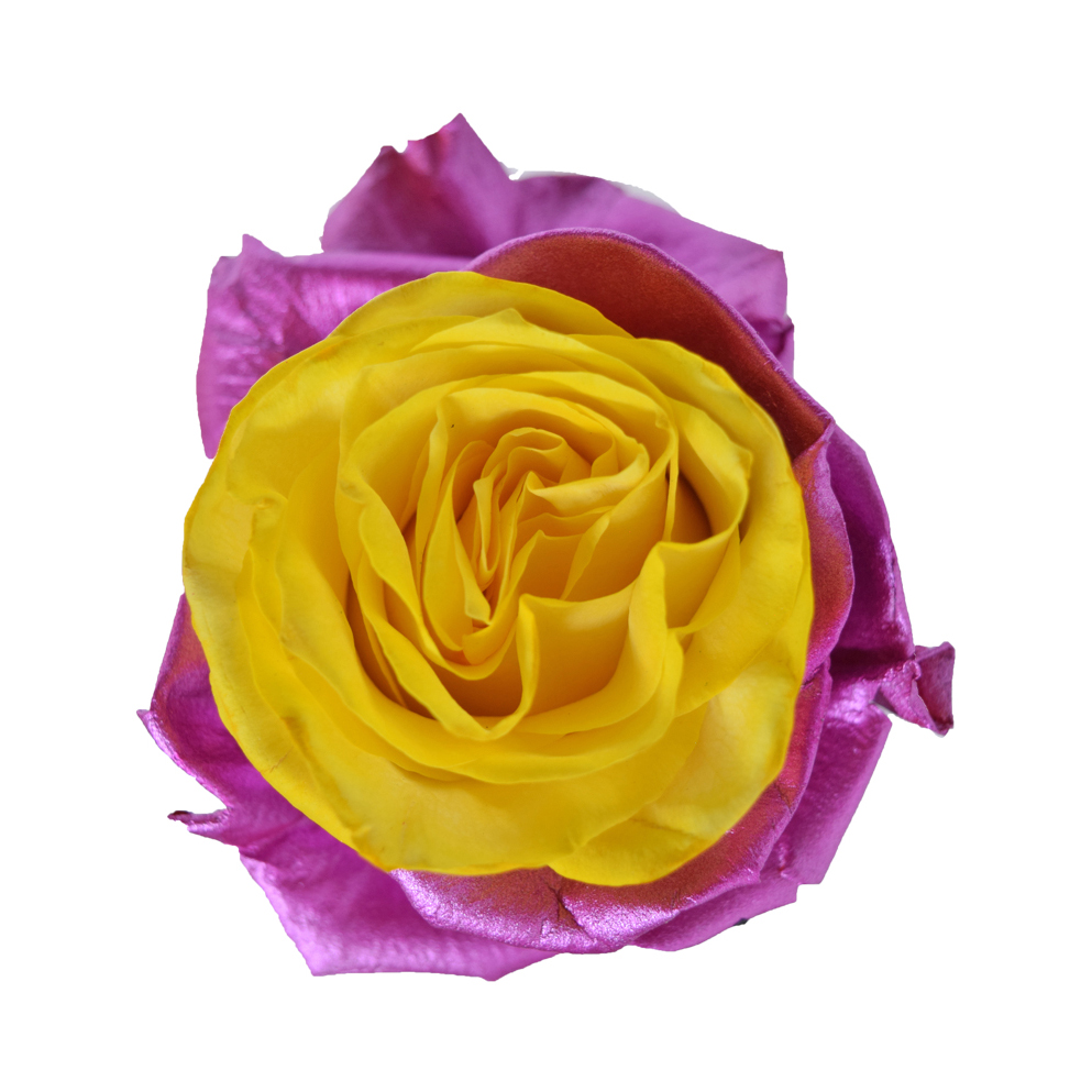 Tinted roses spraying variants 8
