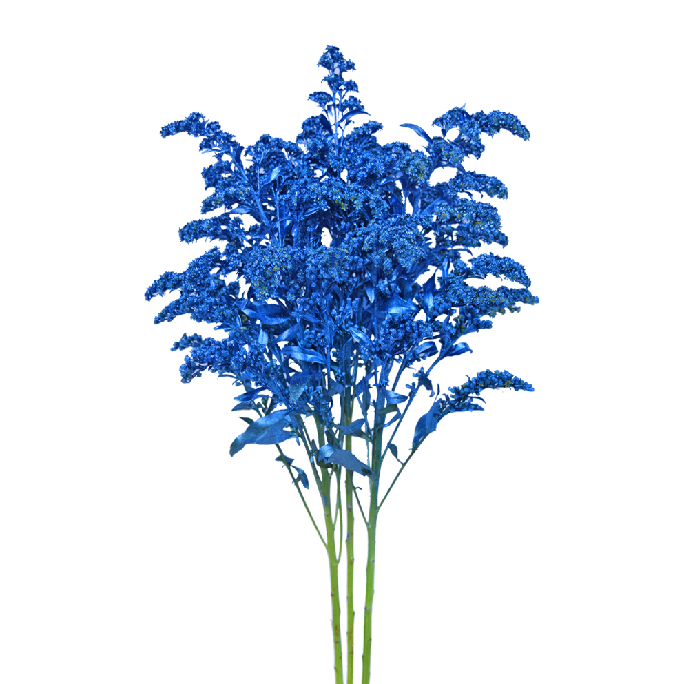Tinted solidago metalized blue