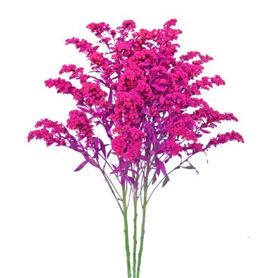 Tinted solidago pink
